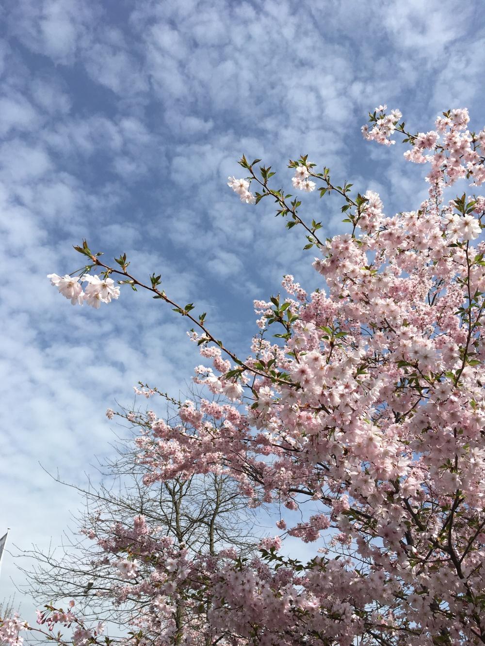 2018-04-15 Floraison